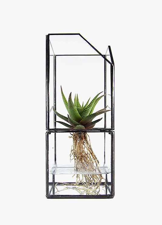 20_black_chamfer_plant